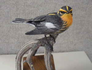 Bill Rice - Black Burnian Warbler