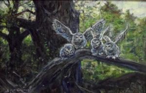 Adolescent Barred Owls, 12x18