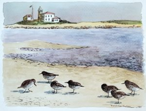 Sand Piepers 8x11 1981 watercolor