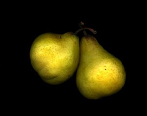 Yellow Pears<br> Epson print 11x14  $200<br> Acrylic mount 20x24 $600<br/>