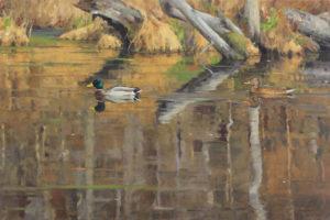 Reflections Woodland Pool